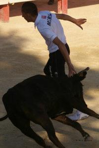 fête du taureau